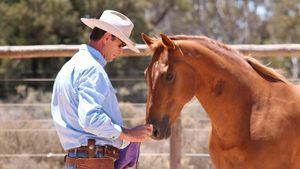 CANCELLED - Steve Halfpenny Horsemanship Clinic - GIDGEGANNUP @ AMT Equestrian