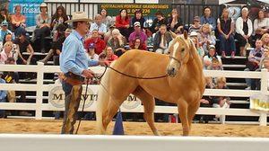 Steve Halfpenny Horsemanship Clinic - MARGARET RIVER @ Stockwell Farm